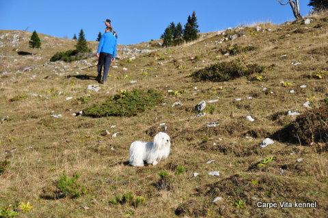 Chunga Lunga hribolazi po Veliki planini