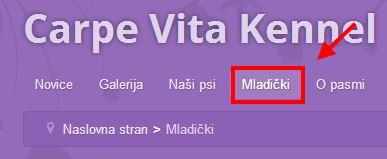 Carpe Vita maldički v novicah.
